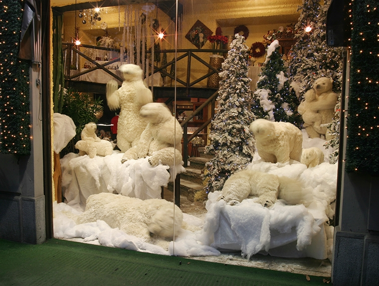orsi bianchi vetrina